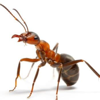 Need an ant exterminator